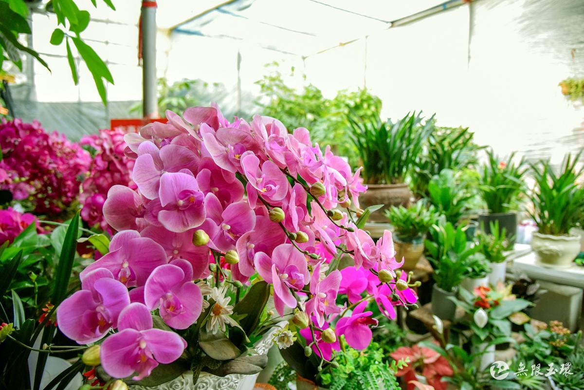 新年买盆花装点家居和心情 怎么逛花卉市场有讲究!