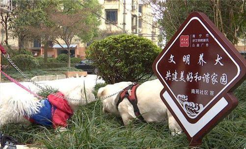 海宁:居民自治 南苑社区开启文明养犬新模式