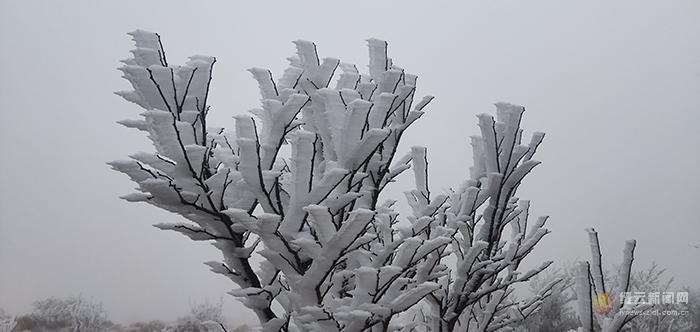 大洋山迎来2020年第一场雪