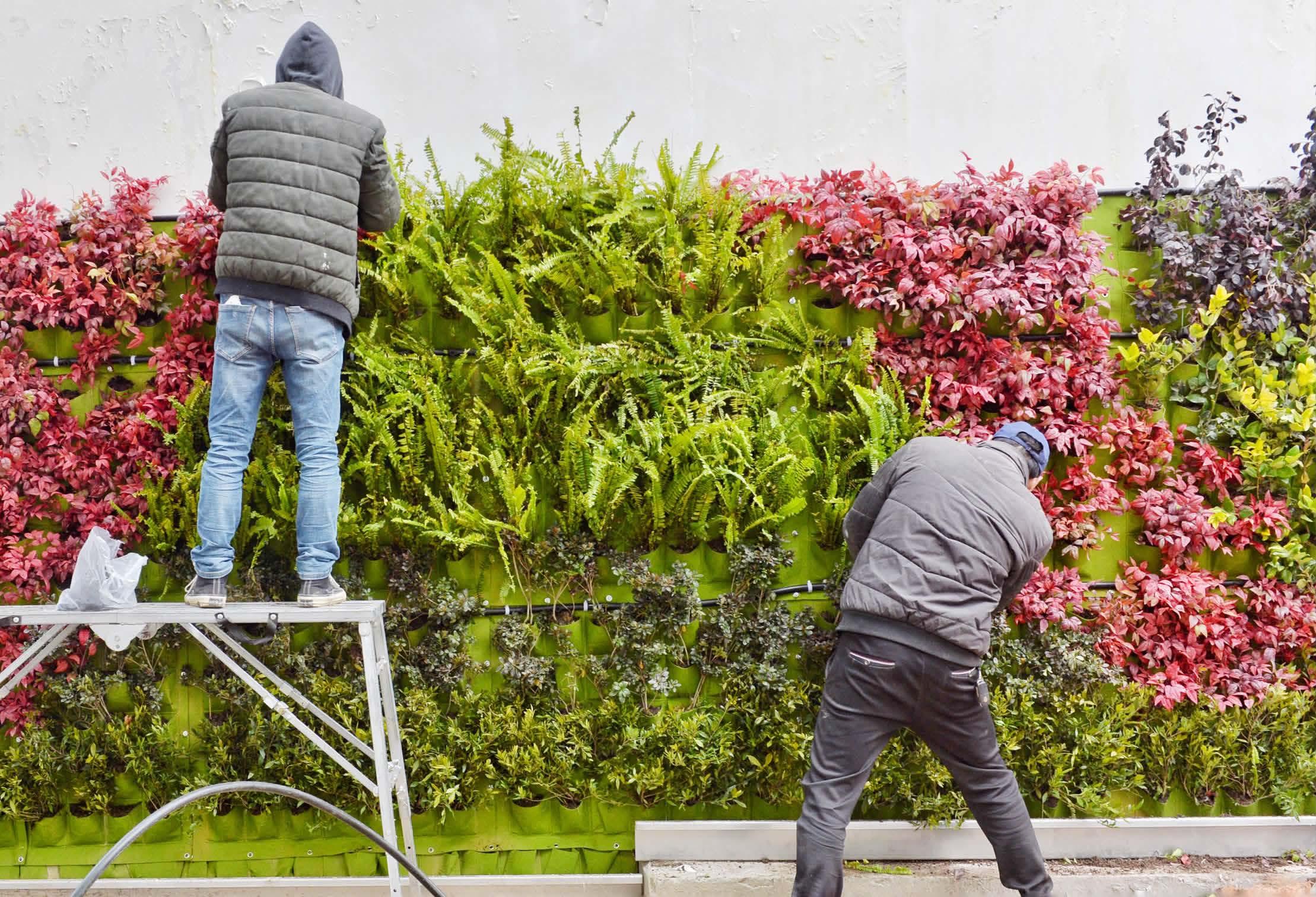 """绿植""""爬""""上墙"""