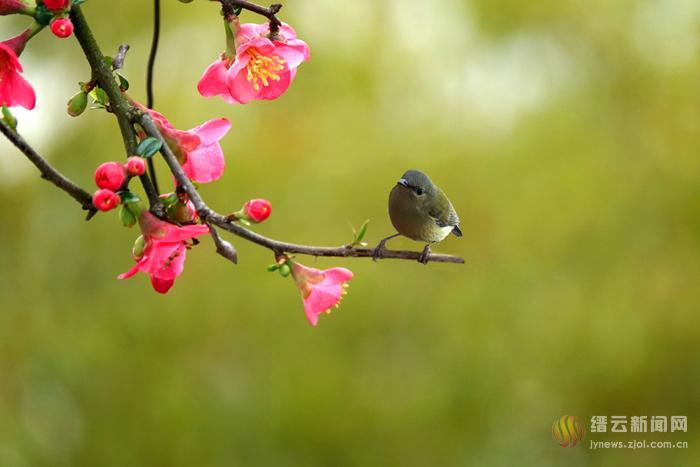 窗外的小鸟