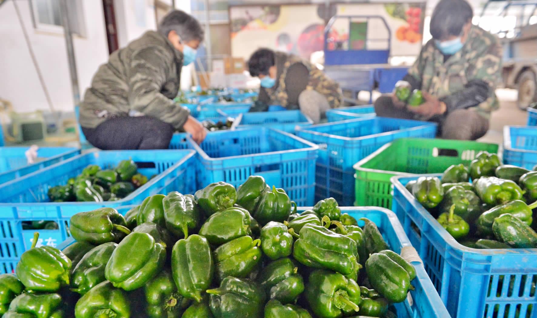 新鲜蔬菜保供市场