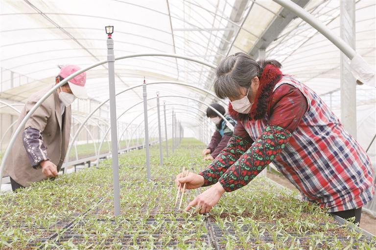 蔬菜基地 种菜忙