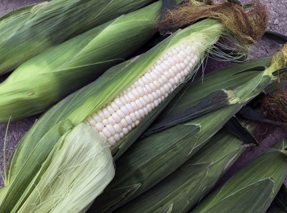 我市超过500亩水果玉米播种
