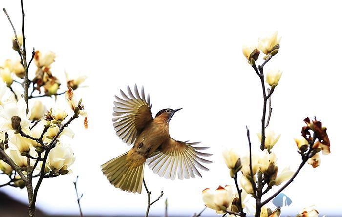 春花烂漫鸟儿欢