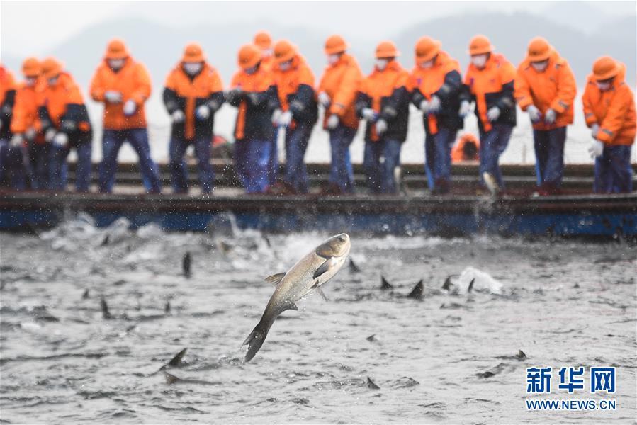 浙江千岛湖新春开捕 义卖鲜鱼助力抗击疫情