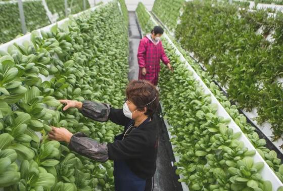 智慧农业不落生产