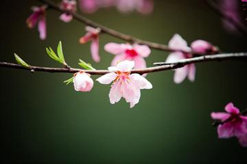 三月春花烂漫 带你感受庆元的春天