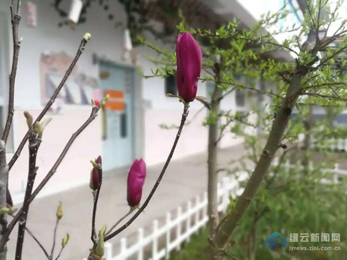 """好久不见,我的校园!""""云""""赏春景,期待重逢!!"""