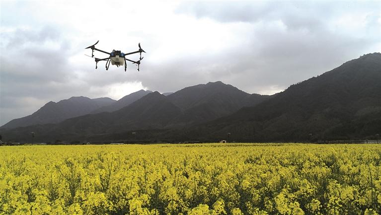 小梅镇首次使用无人机进行精准施肥