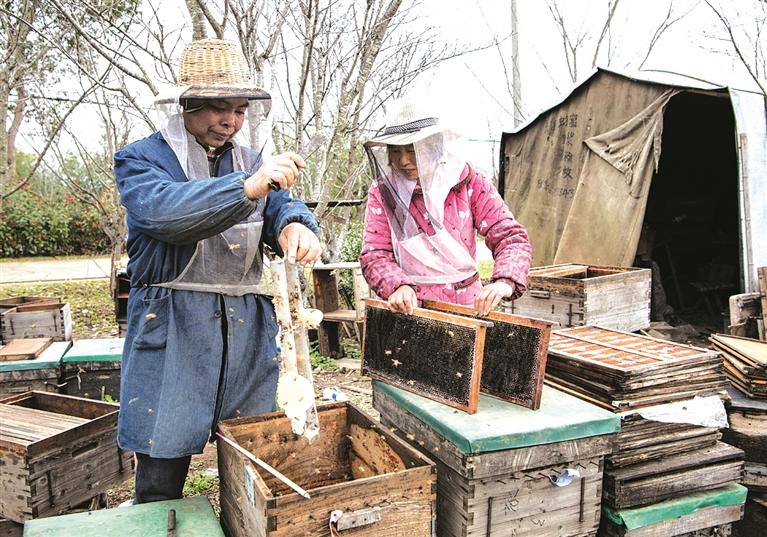 剑池街道宏阳村村民悉心照料着他们的300多箱蜜蜂