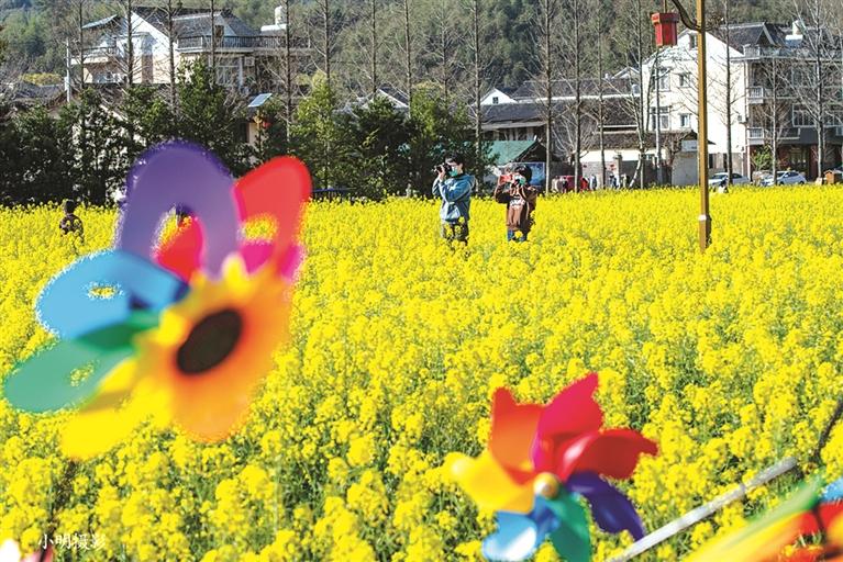 小梅镇黄南村大片的油菜花盛开