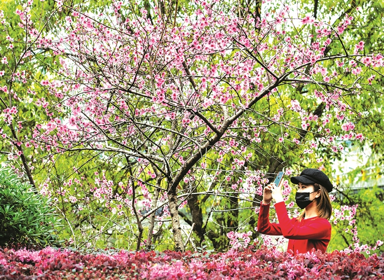 春暖花开,踏青赏景