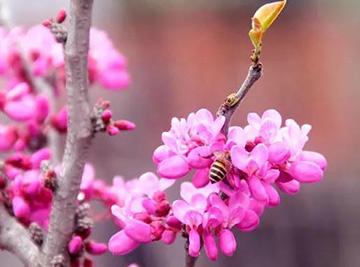 """春来疫去 一切向好――小编带你""""云赏花"""""""