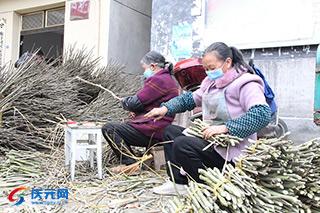 嶺頭鄉引進木槿花中藥材基地