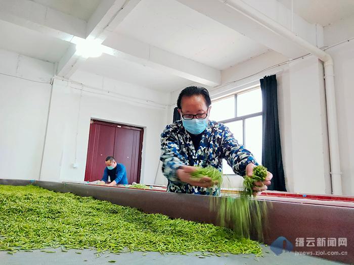 缙云县以村集体经济发展为支点 撬动茶产业增产增收