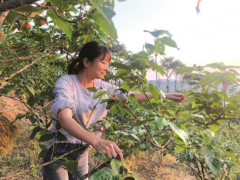 兰巨乡桐山村花果山水果基地吸引不少游客前来采摘