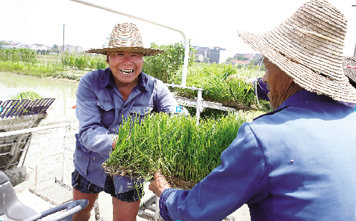 千亩稻田 忙插秧