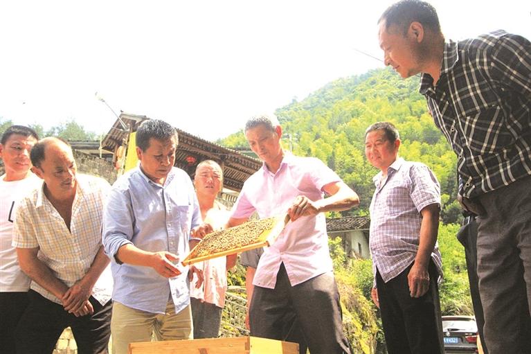专家亲临现场指导 助推蜂农增收致富