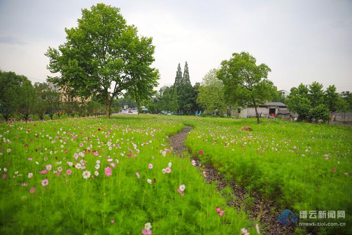 波斯菊花园