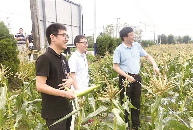 我市首次举办浙江农业之最粮油亩产(水果玉米)挑战赛
