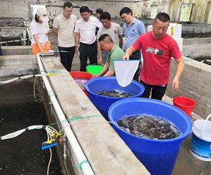 我县增殖放流日本对虾近9500万尾