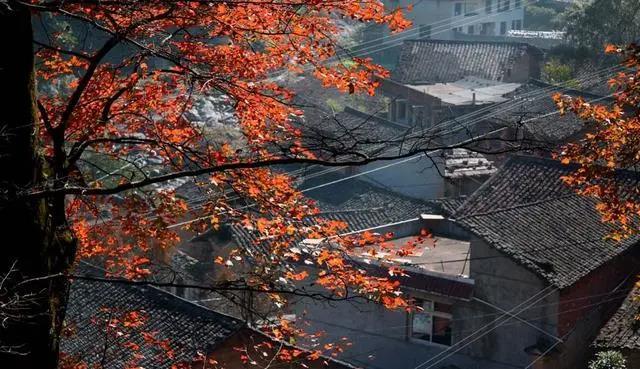 官浦垟村,一道隐藏的风水秘语