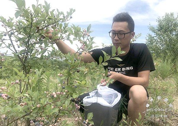 """万株蓝莓成""""野果"""" 果农希望通过优惠采摘活动减少损失"""