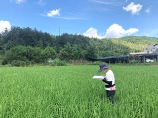 农技人员指导水稻病虫害防治工作