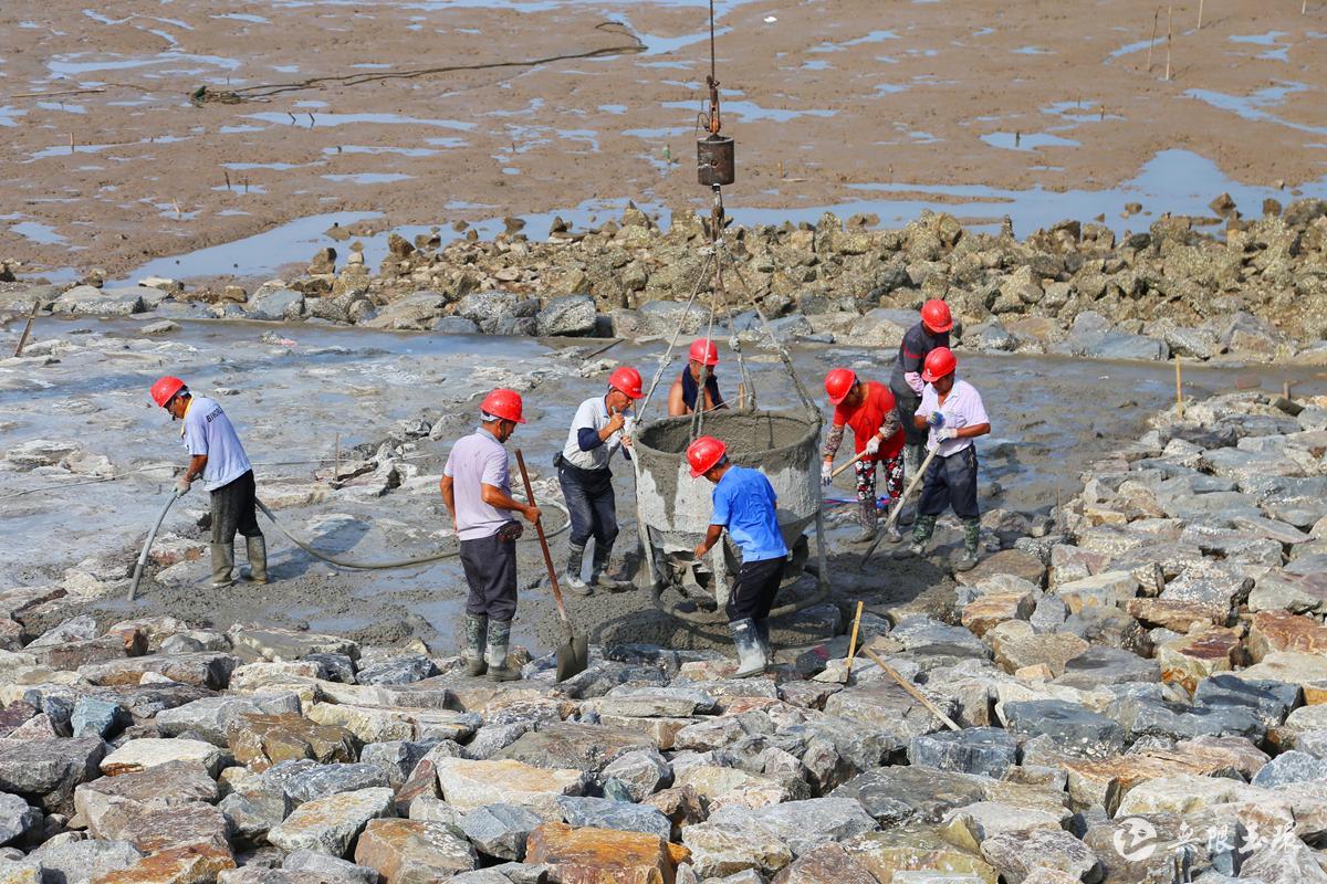 干江:加固海堤安全防汛