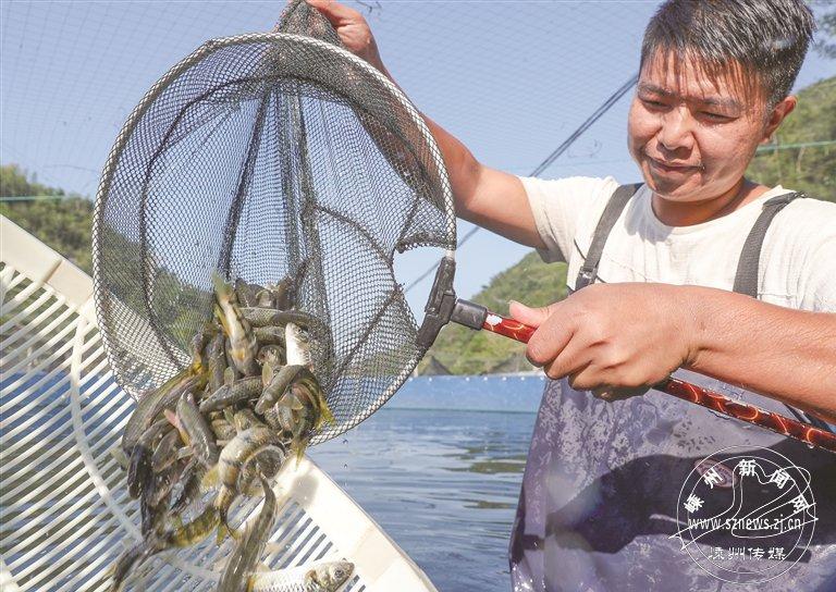 淡水石斑鱼养殖收益好