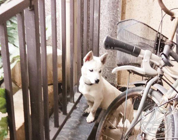 规范养犬 让城市更文明
