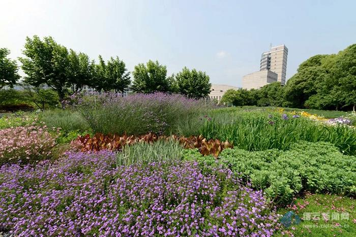 """缙云:打造""""高颜值""""花境 赋予城市更高贵的灵魂"""