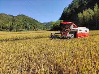 农机助力稻谷丰收