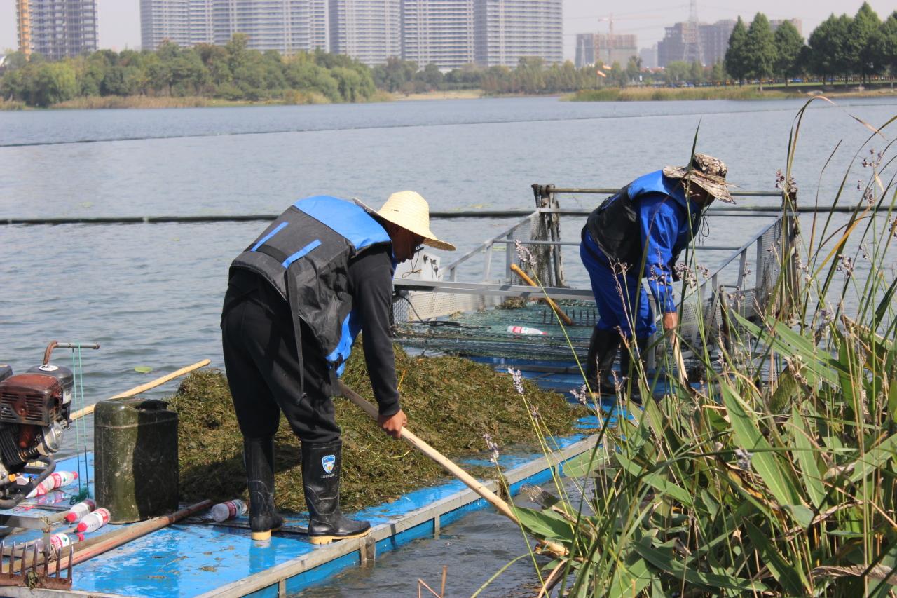 清理水草美化环境