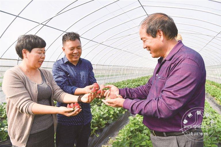 草莓新品种上市