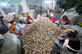 庆元香菇市场交易逐年上升