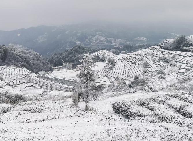 岭头山初雪