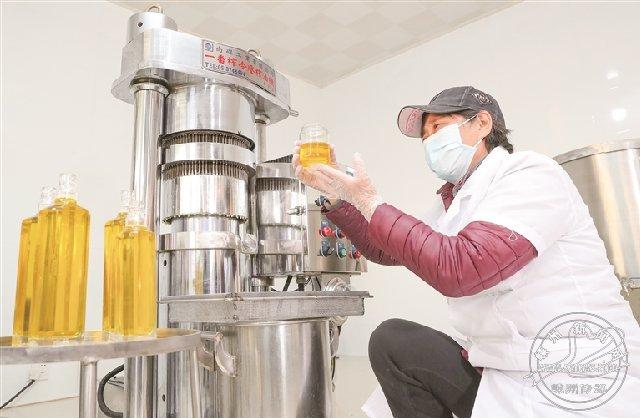 传统压榨山茶油