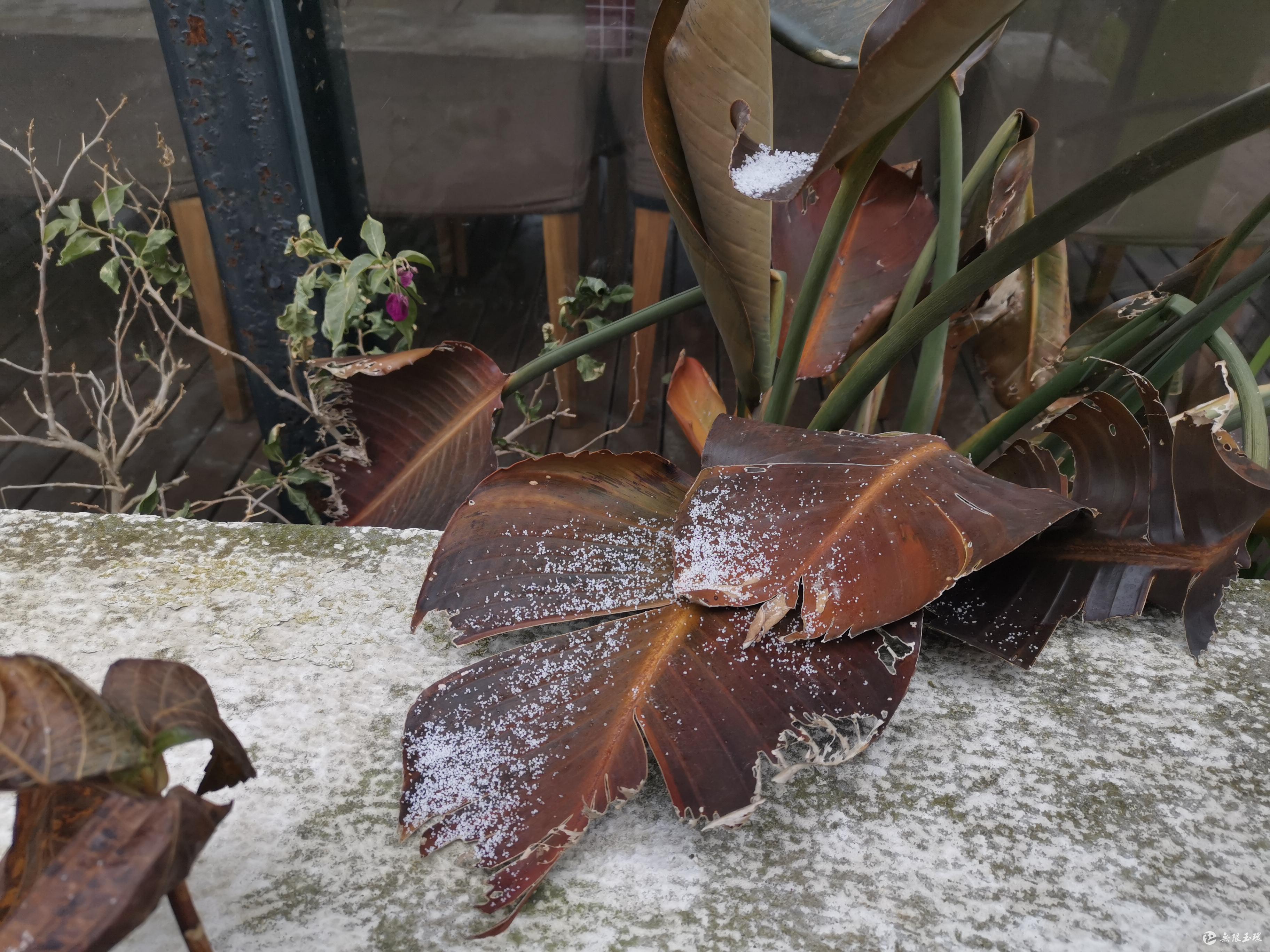 玉环下雪啦!