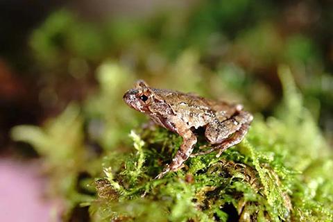 重磅!百山祖国家公园发现了全球新物种!刷新世界纪录!