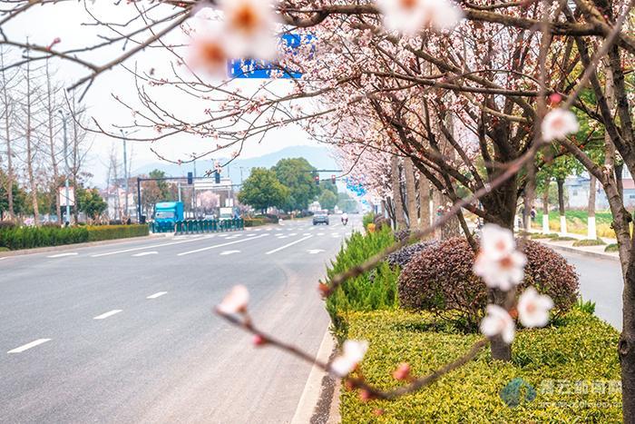 路在花中 花繁路靓