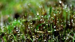 冷空气今天下午来袭 又是被春雨唤醒的一周