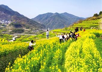 岭南乡覆卮山油菜花节启动