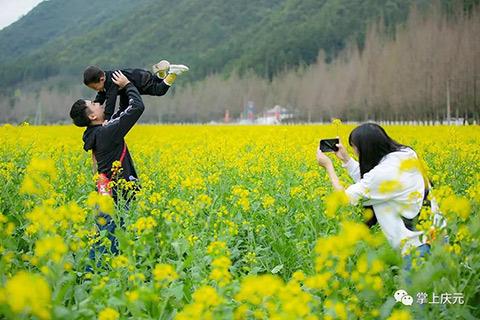幸遇三春事好 去竹口油菜花田追寻春的脚步