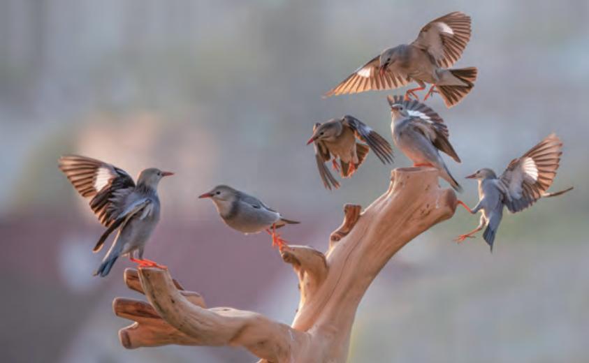爱鸟护鸟 万物和谐