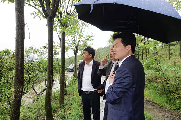 严钢调研城北化工园区