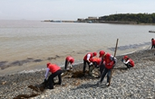 百名志愿者共赴文明示范湾滩净滩