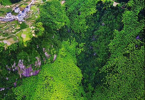 大型真菌、珍稀动植物、绝美森林美景,庆元研学游胜地,了解一下!
