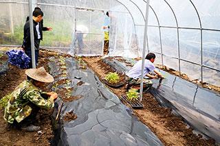 西红柿种植技术实地培训